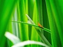 grass-10