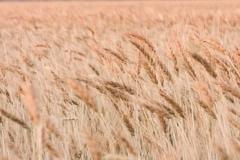 grass-14