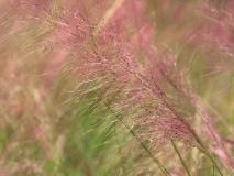 grass-19
