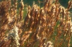 grass-21