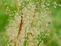 grass-5