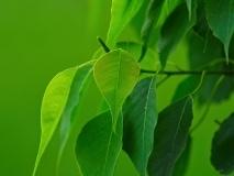 trees-11