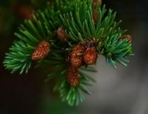 trees-12