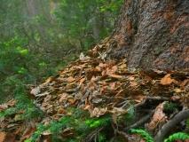 trees-16