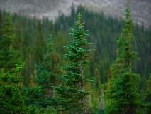trees-18