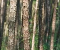 trees-21