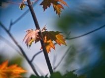 trees-6