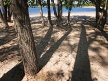 trees-7