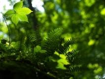 plants-15